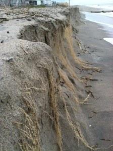 edisto-beach-erosion