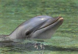 folly beach dolphin watching