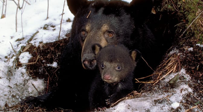 Bear-Proofing Your Home